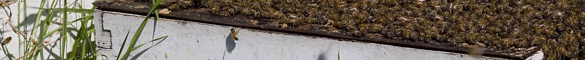 American-Bee-Journal-beekeeping-2