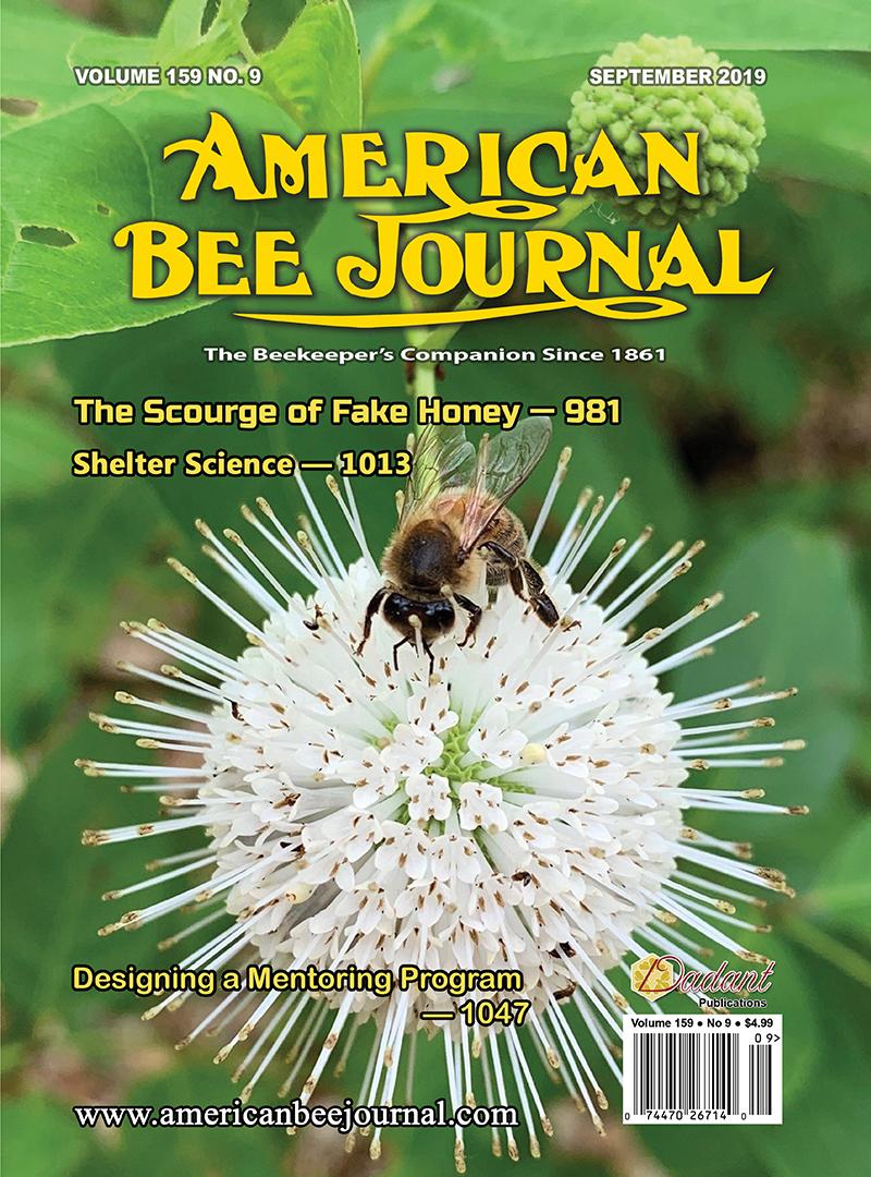 ABJ September 2019 Cover